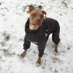 9 Times Dallas Dogs Owned the Thundersleet