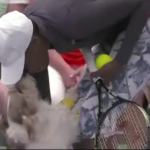 Dogs working as ball boys during practice tennis match