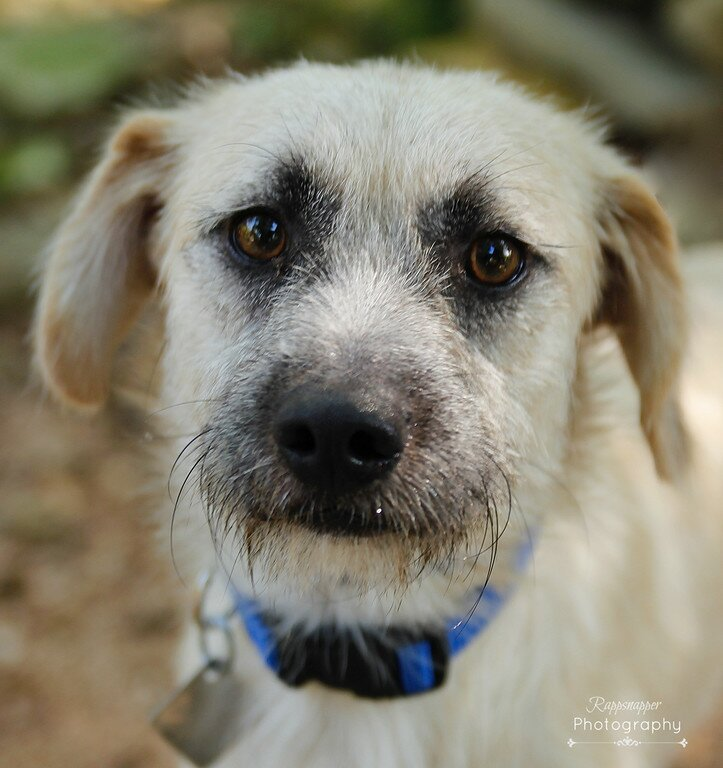 Operation Kindness Adoptable Dogs