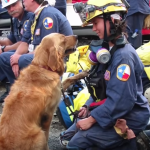 Last Known Living 9/11 Search and Rescue Dog Gets the Best Day of Her Life