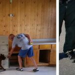 Normangee PD Welcomes Pit Bull Detection Dog, K9 Wilson